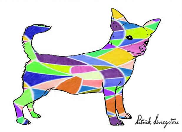 Chihuahua drawing colored a