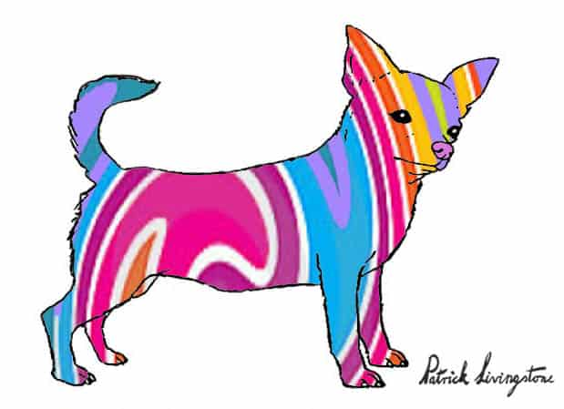 Chihuahua drawing colored d