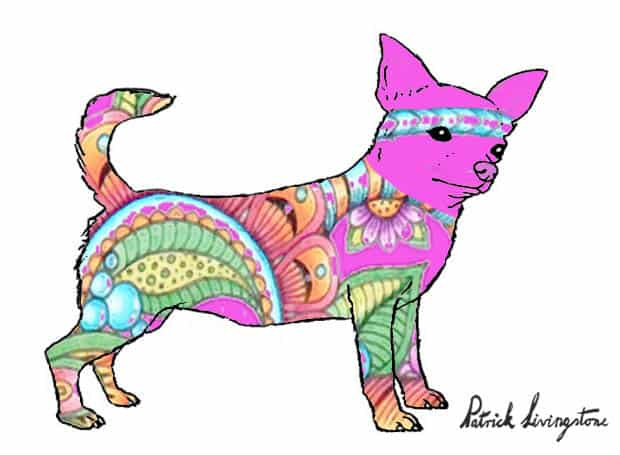 Chihuahua drawing colored e