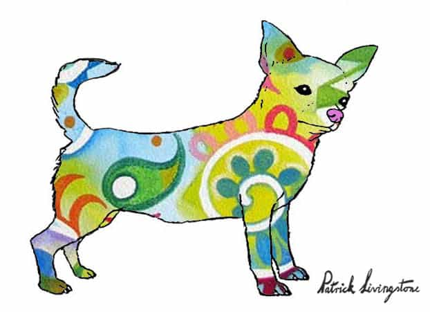 Chihuahua drawing colored i