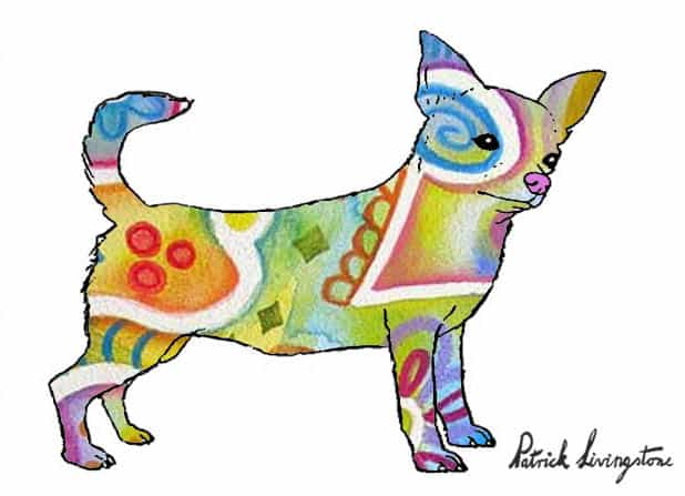 Chihuahua drawing colored q