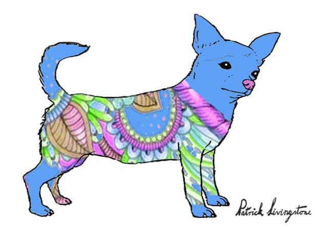 Chihuahua drawing colored r