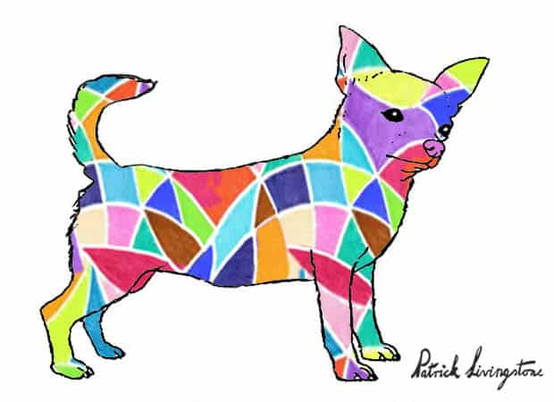 Chihuahua drawing colored t