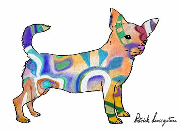 Chihuahua drawing colored u