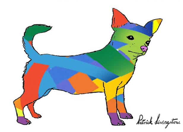 Chihuahua drawing colored y