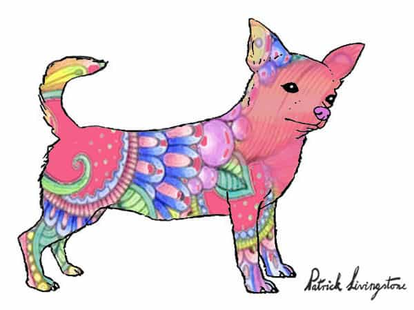 Chihuahua drawing colored z