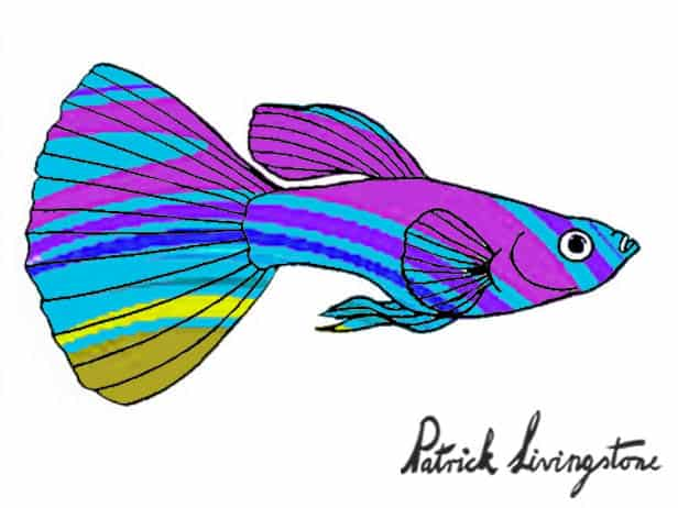 Guppy drawing colored 1