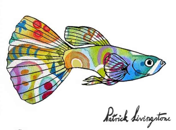 Guppy drawing colored 13