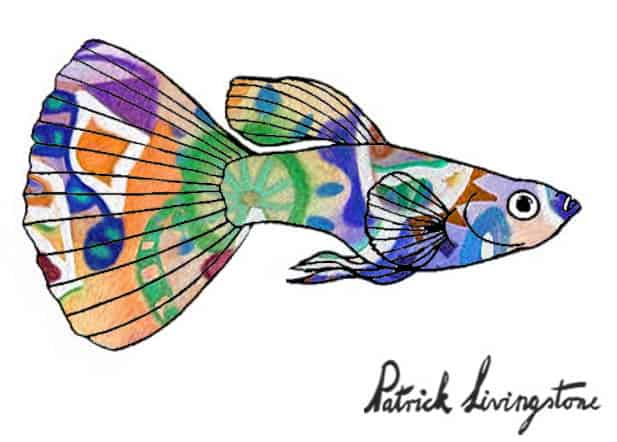 Guppy drawing colored 14