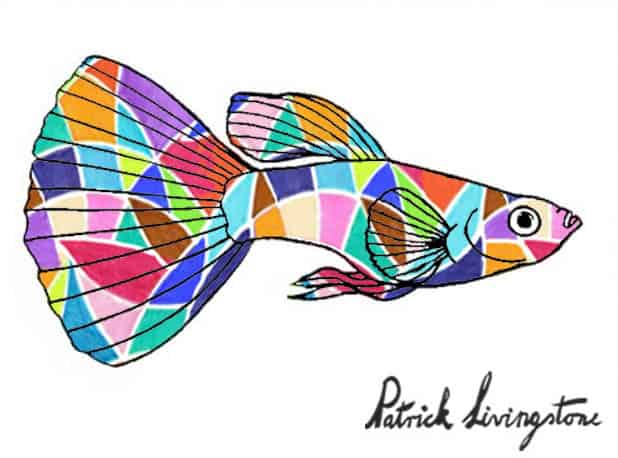 Guppy drawing colored 16