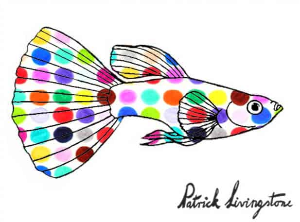 Guppy drawing colored 6