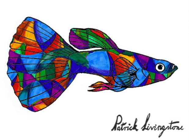 Guppy drawing colored 7