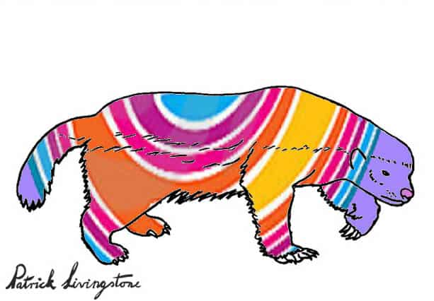Honey Badger Drawing colored e