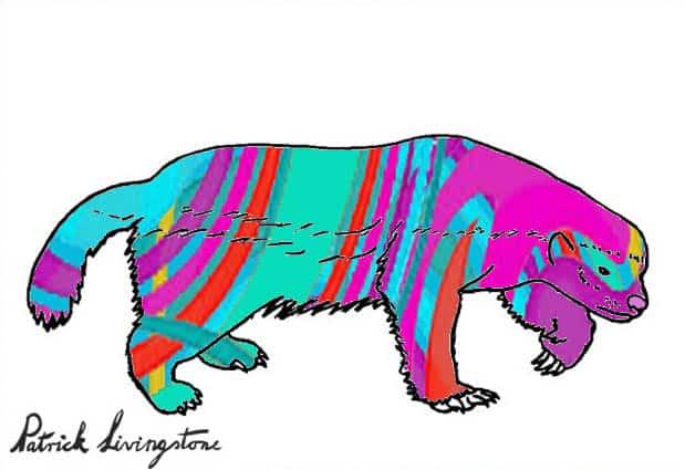 Honey Badger Drawing colored j