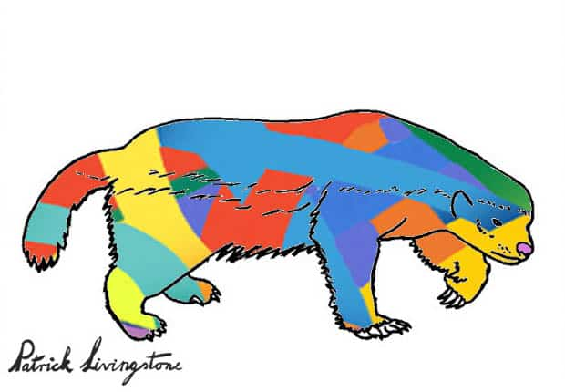 Honey Badger Drawing colored o