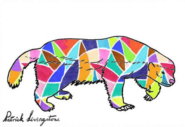 Honey Badger Drawing colored p