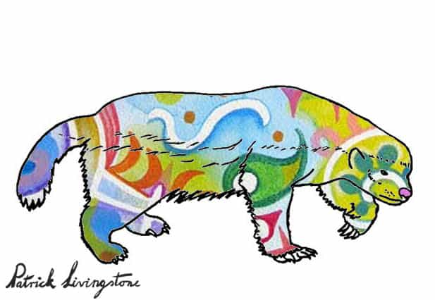 Honey Badger Drawing colored t