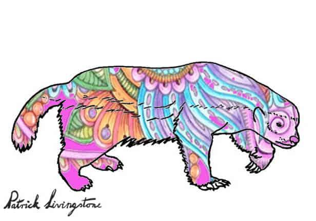 Honey Badger Drawing colored u