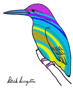 Kingfisher drawing colored 1