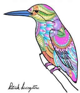 Kingfisher drawing colored 15