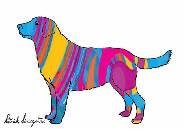 Labrador drawing colored k
