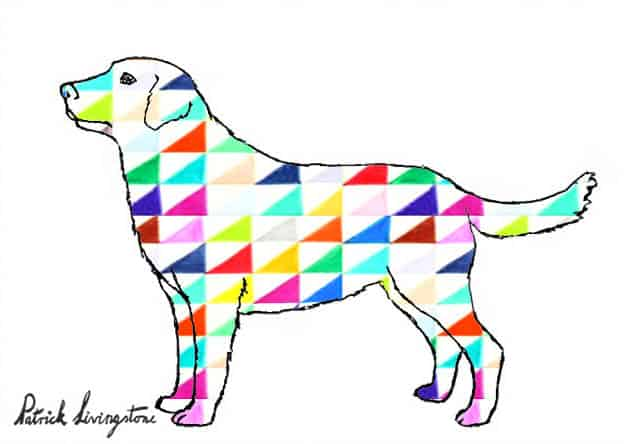 Labrador drawing colored t
