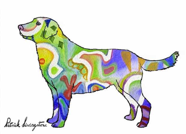 Labrador drawing colored y