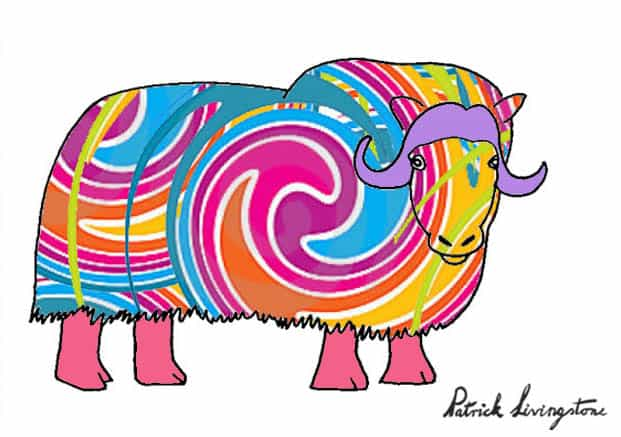 Musk ox drawing colored g