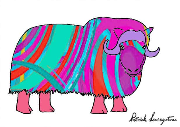 Musk ox drawing colored h