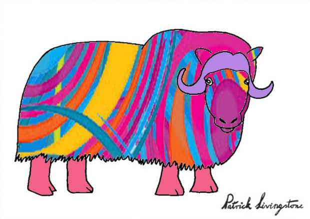 Musk ox drawing colored l