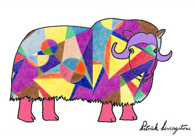 Musk ox drawing colored o