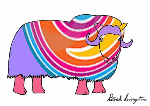 Musk ox drawing colored p