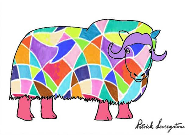 Musk ox drawing colored r