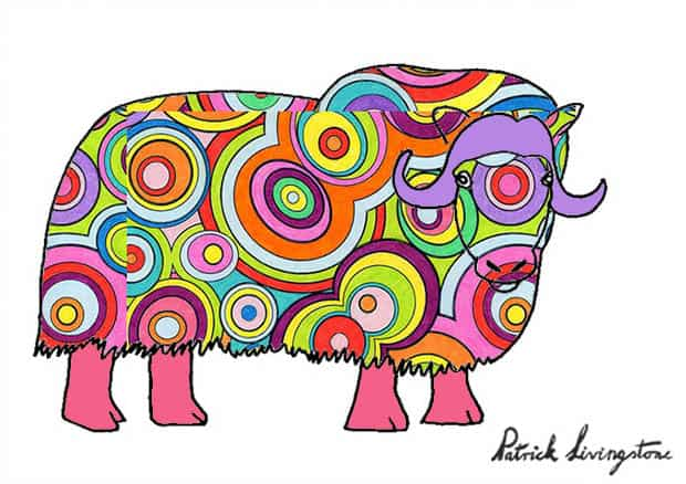 Musk ox drawing colored s