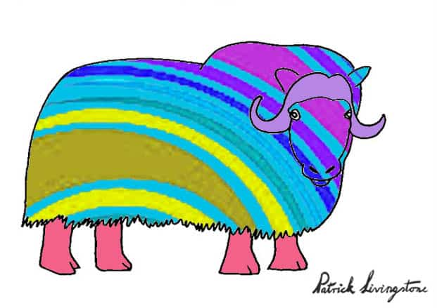 Musk ox drawing colored z
