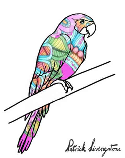 Parrot drawing colored