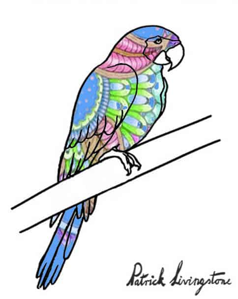 Parrot drawing colored 1