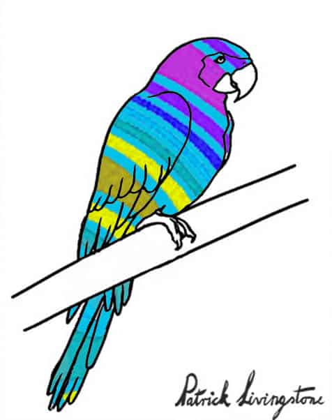 Parrot drawing colored A1