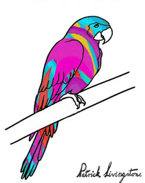 Parrot drawing colored f