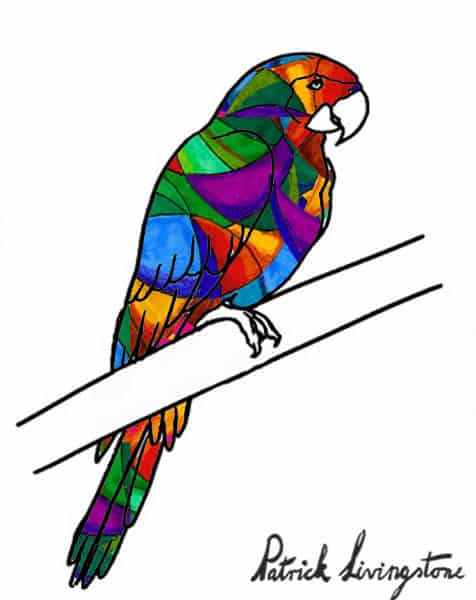 Parrot drawing colored q