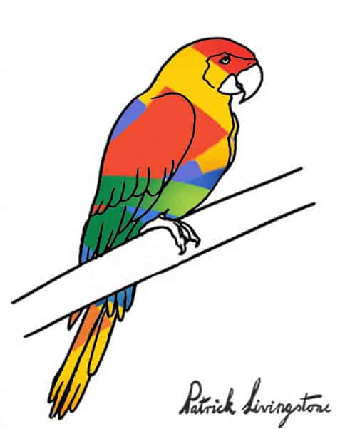 Parrot drawing colored r
