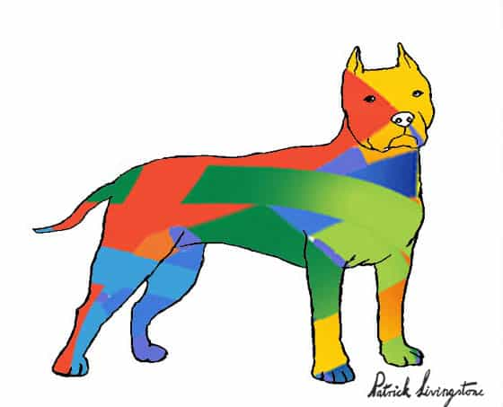 Pitbull terrier drawing colored