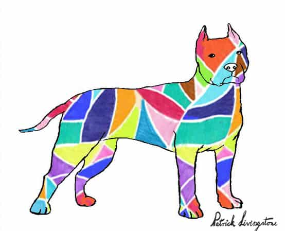 Pitbull terrier drawing colored 2