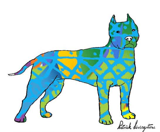 Pitbull terrier drawing colored 4