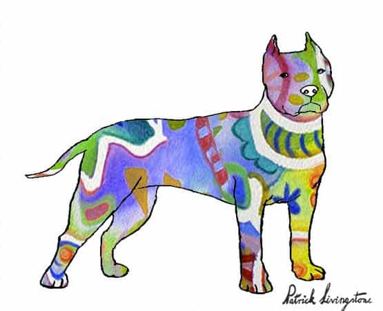 Pitbull terrier drawing colored 5