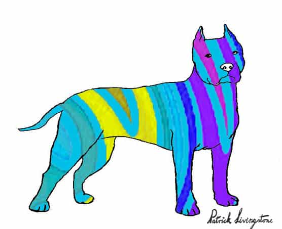 Pitbull terrier drawing colored a