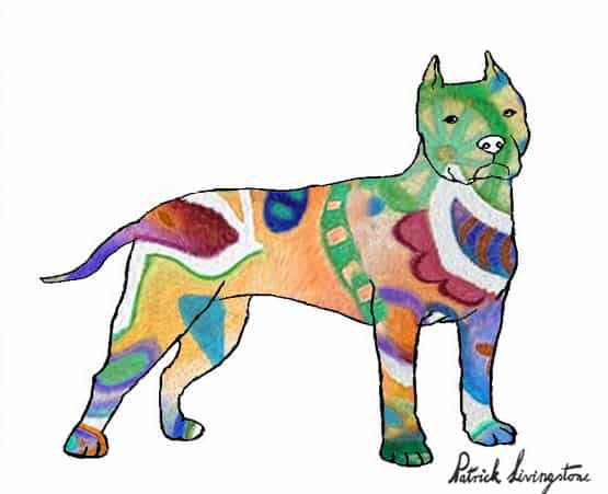Pitbull terrier drawing colored e