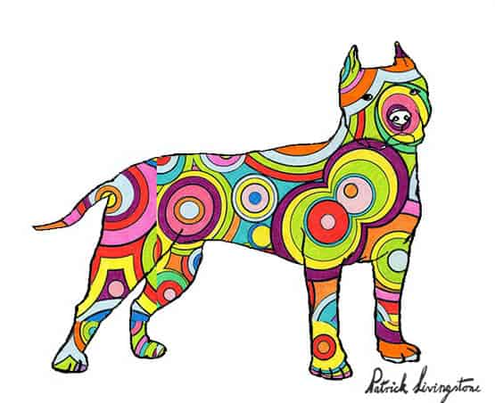 Pitbull terrier drawing colored i