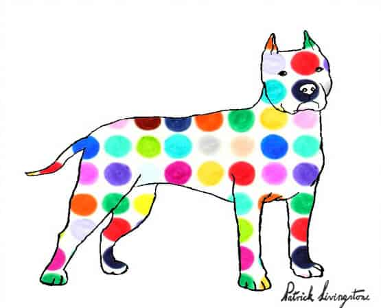 Pitbull terrier drawing colored p
