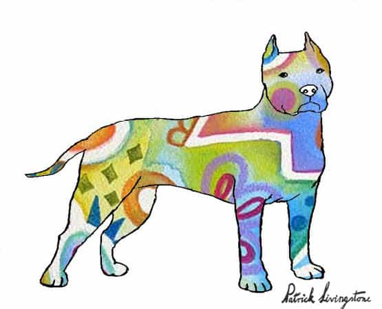 Pitbull terrier drawing colored r